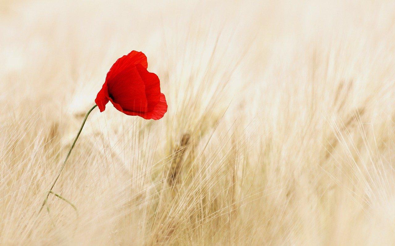 flower-100263_1280